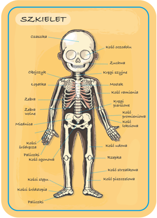Układanka magnetyczna Ciało człowieka, Janod